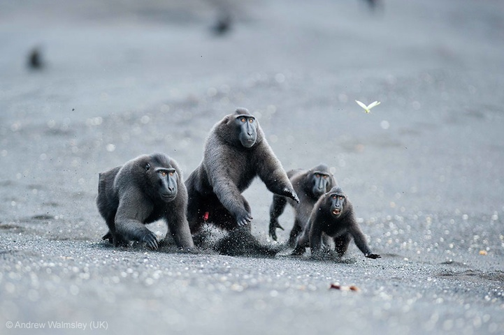 Winners of the Wildlife Photographer of the Year 2013-005