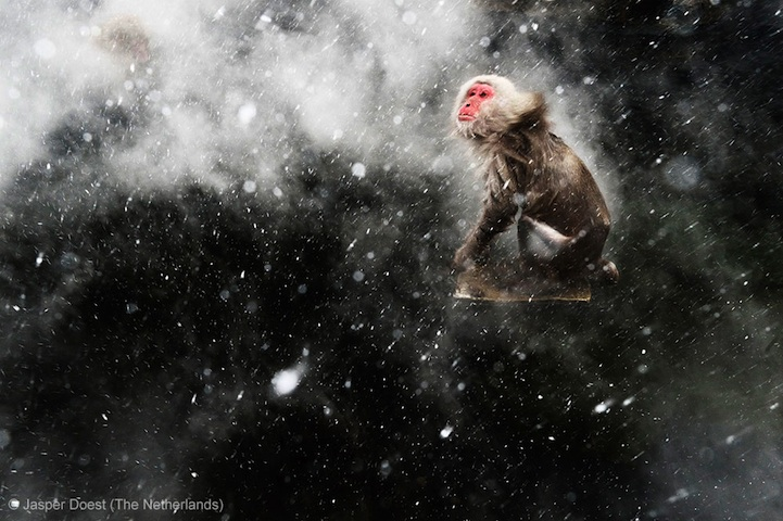 Winners of the Wildlife Photographer of the Year 2013-014