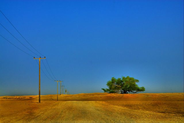 A Miraculous Survival of Tree in the desert of Bahrain 13