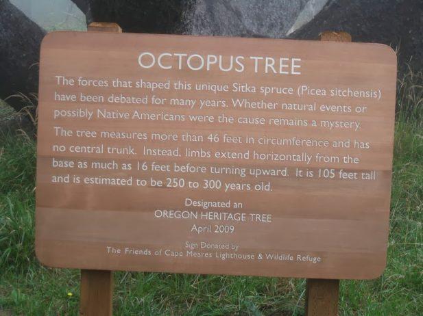 The Octopus Tree of Oregon 3