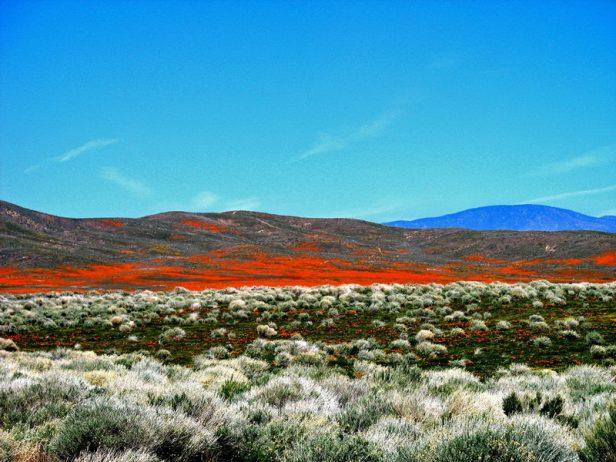 Antelope Valley Poppy Reserve in California18_exposure_resize