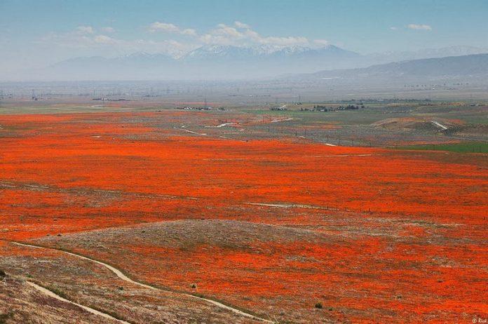 Antelope Valley Poppy Reserve in California6_exposure_resize