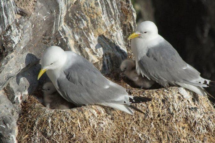 Bird Watching at Latrabjarg Cliffs, Iceland12_exposure_resize