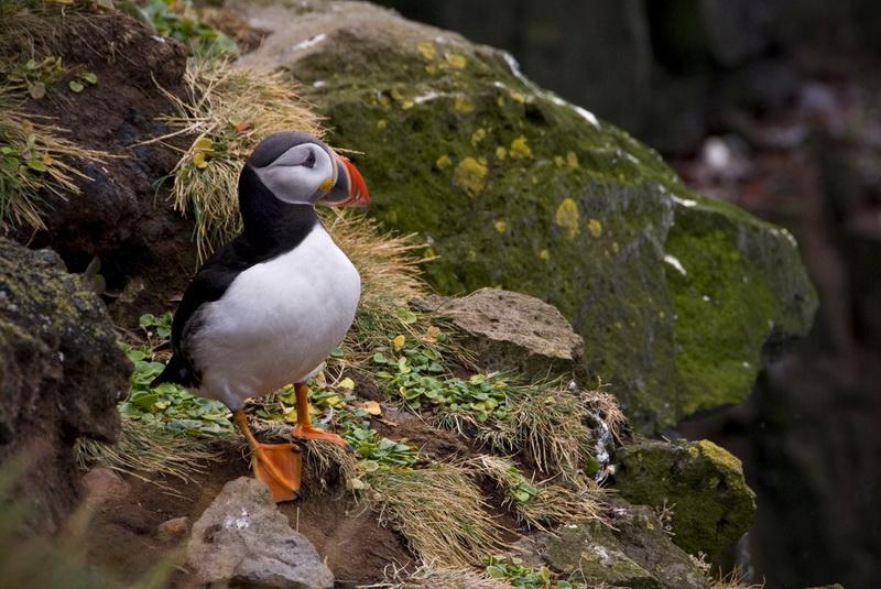 Bird Watching at Latrabjarg Cliffs, Iceland22_exposure_resize