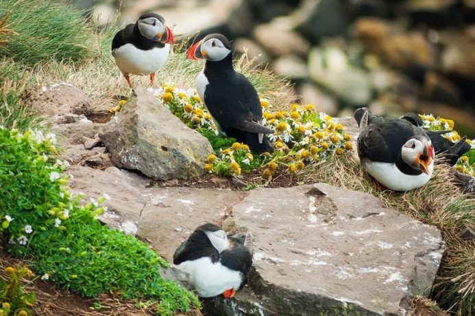 Bird Watching at Latrabjarg Cliffs, Iceland2_exposure_resize