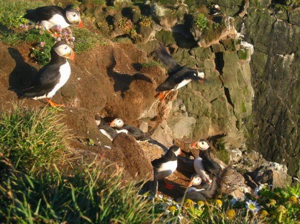 Bird Watching at Latrabjarg Cliffs, Iceland5_exposure_resize