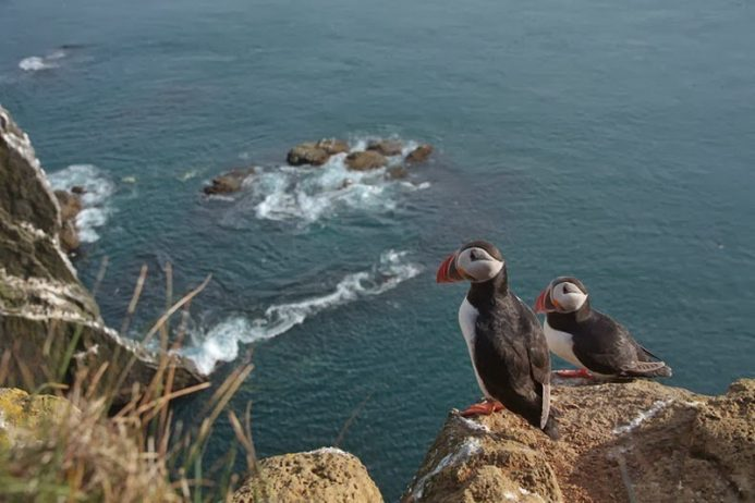Bird Watching at Latrabjarg Cliffs, Iceland7_exposure_resize