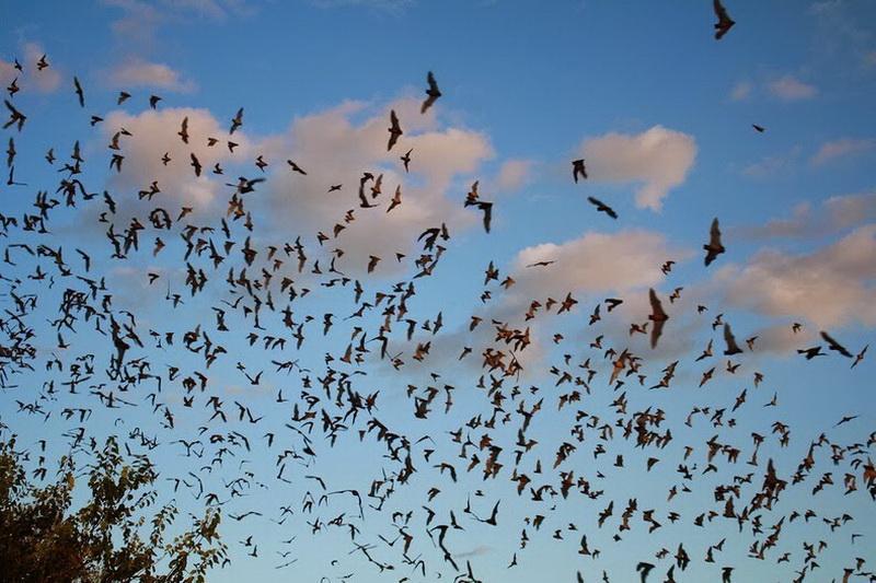 Bracken Bat Cave10_exposure_resize