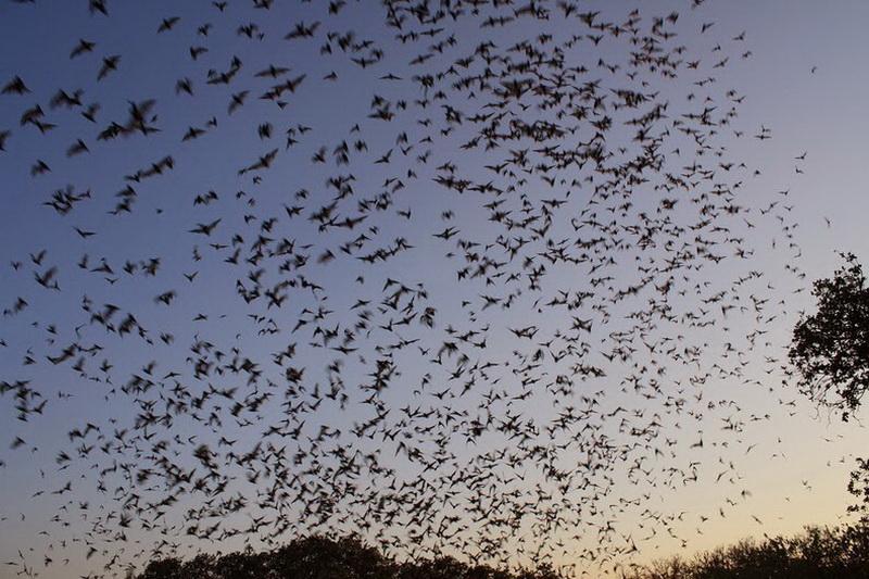 Bracken Bat Cave11_exposure_resize
