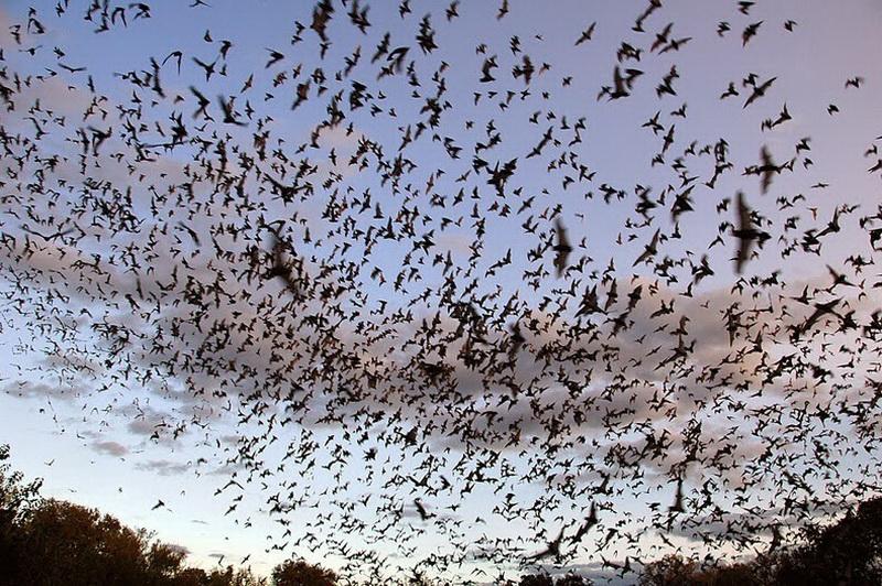 Bracken Bat Cave5_exposure_resize