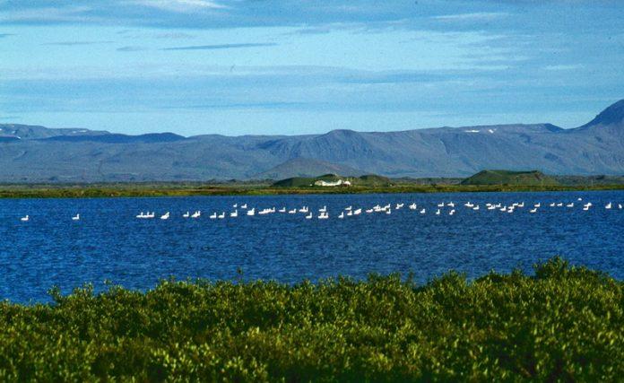 Lake Mývatn Iceland 15_resize