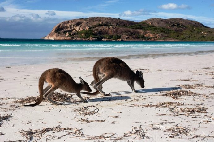 White Sandy Beaches Australia 12