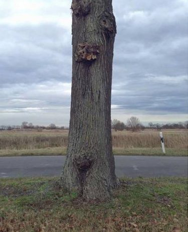 Puzzling Optical Illusion of a Hovering Tree Cut in Half1