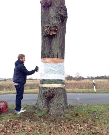 Puzzling Optical Illusion of a Hovering Tree Cut in Half3