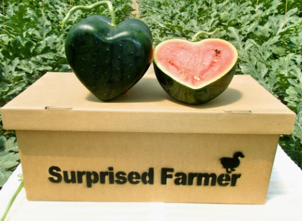 world's first heart-shaped watermelon (1)