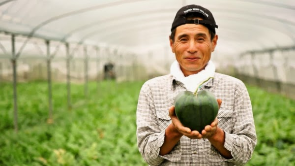 world's first heart-shaped watermelon (5)