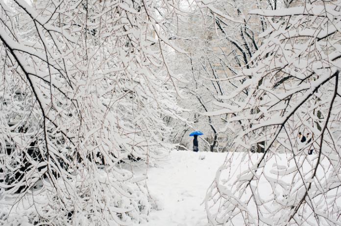 Wintery Wonderland of Central Park 2