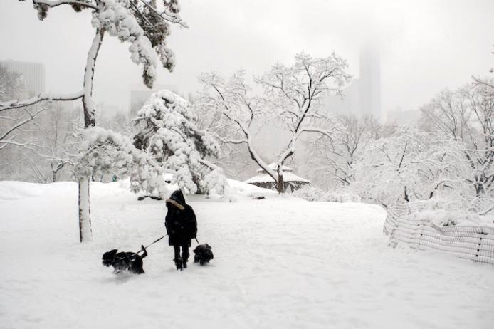 Wintery Wonderland of Central Park  3