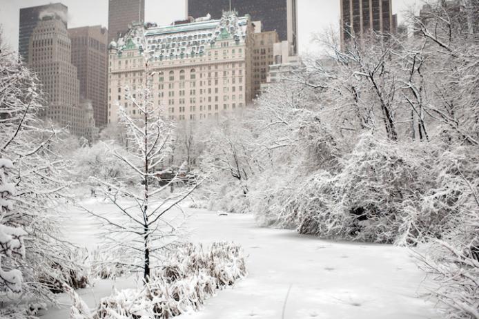 Wintery Wonderland of Central Park  6