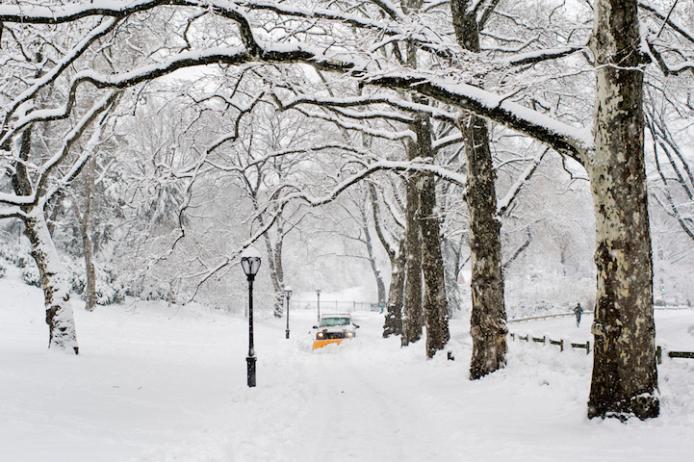 Wintery Wonderland of Central Park  7