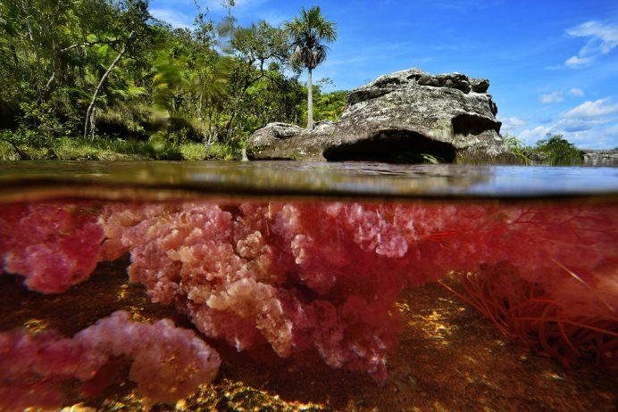 Cano Cristales a small river10