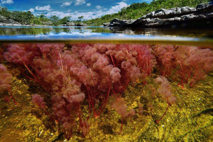 Cano Cristales a small river17