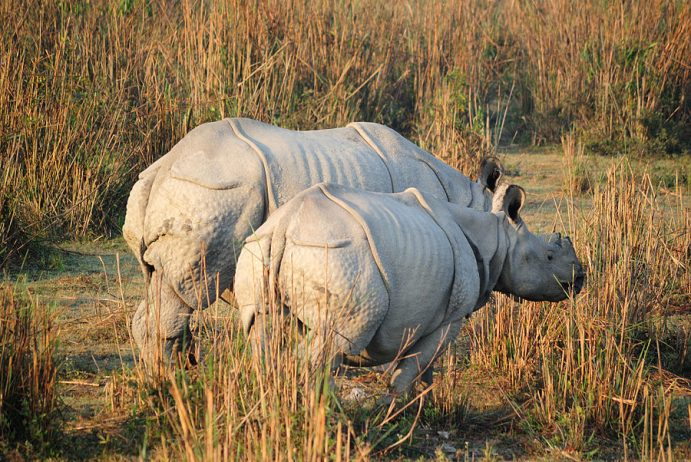Kaziranga National Park India15