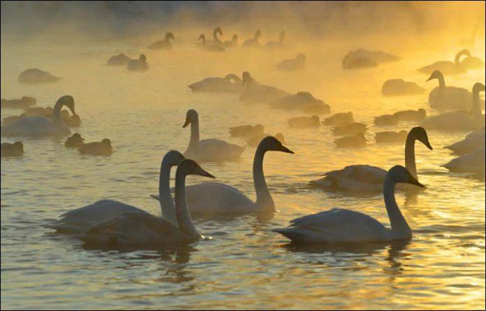 Svetloe Lake Serbia12