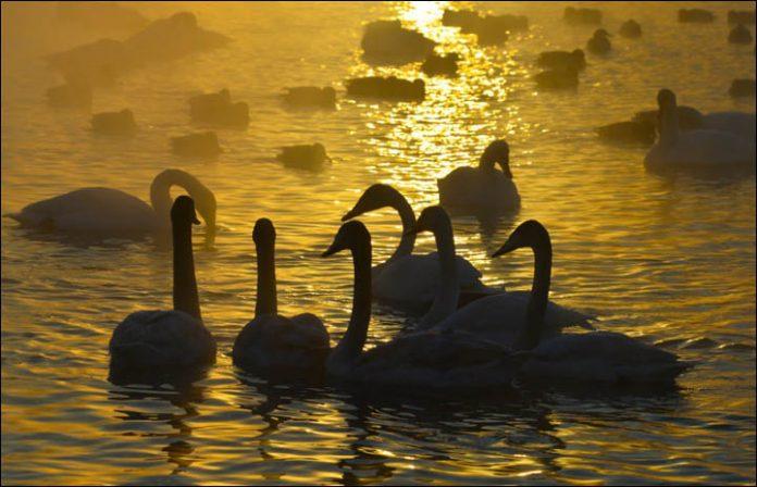 Svetloe Lake Serbia15