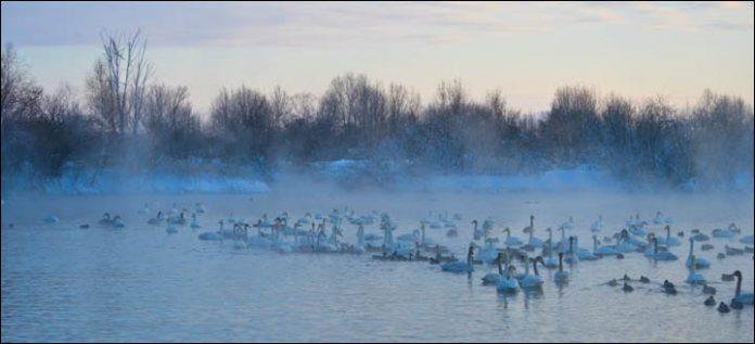 Svetloe Lake Serbia17