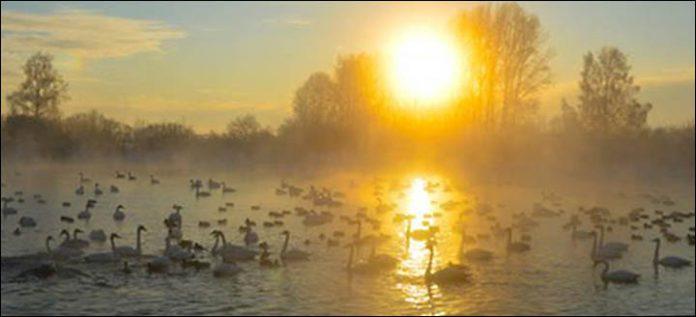 Svetloe Lake Serbia18