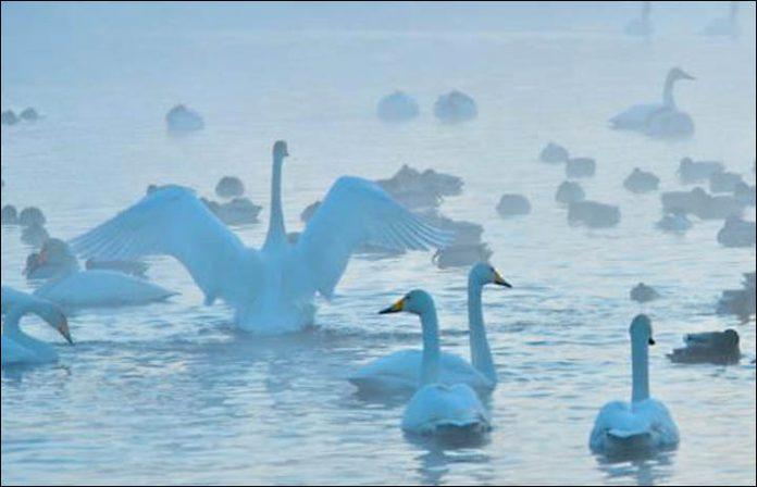 Svetloe Lake Serbia19