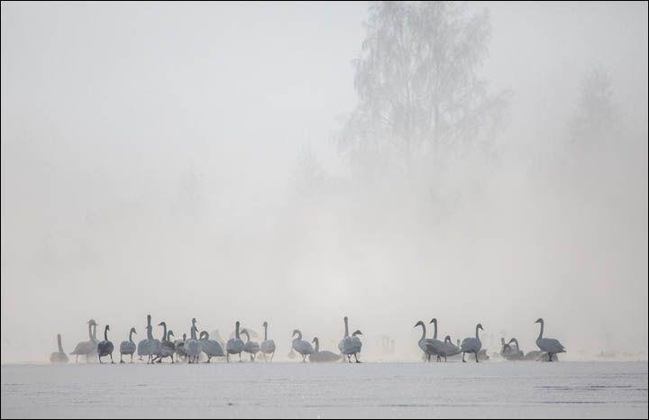 Svetloe Lake Serbia7
