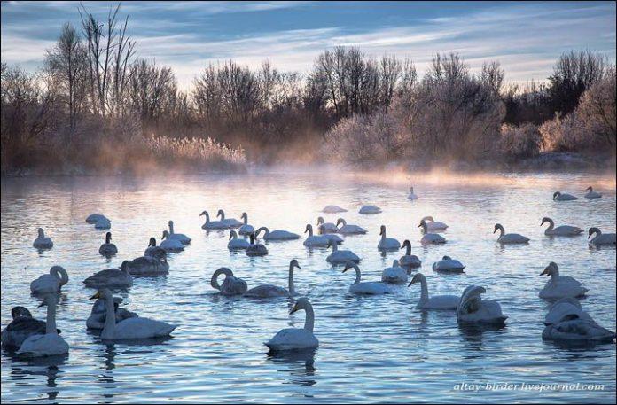 Svetloe Lake Serbia8