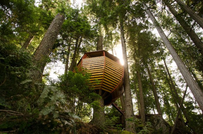 Egg-Shaped Tree House is Secretly Nestled in Canada's Woods2