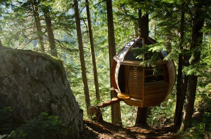 Egg-Shaped Tree House is Secretly Nestled in Canada's Woods3