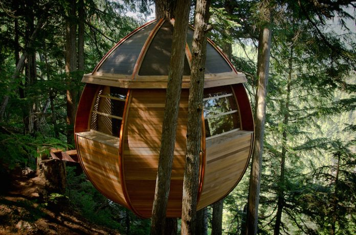 Egg-Shaped Tree House is Secretly Nestled in Canada's Woods4