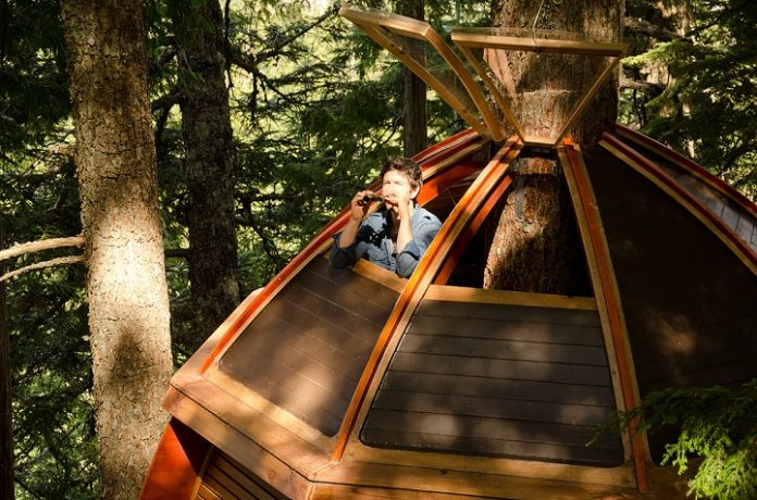 Egg-Shaped Tree House is Secretly Nestled in Canada's Woods5