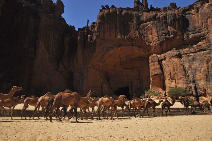 Guelta d'Archei10