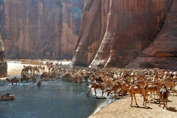 Guelta d'Archei19