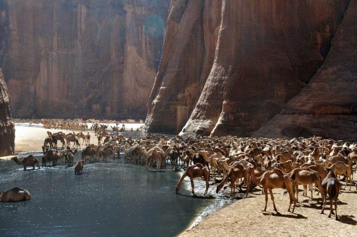 Guelta d'Archei2
