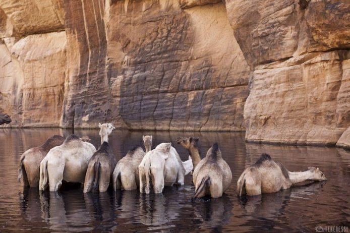 Guelta d'Archei20