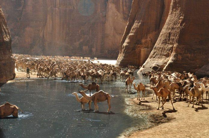 Guelta d'Archei4