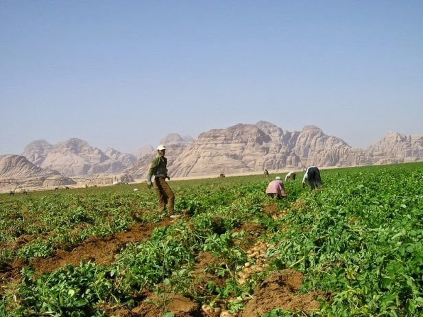 Organic Farming in the Desert of Wadi Rum - Charismatic Planet