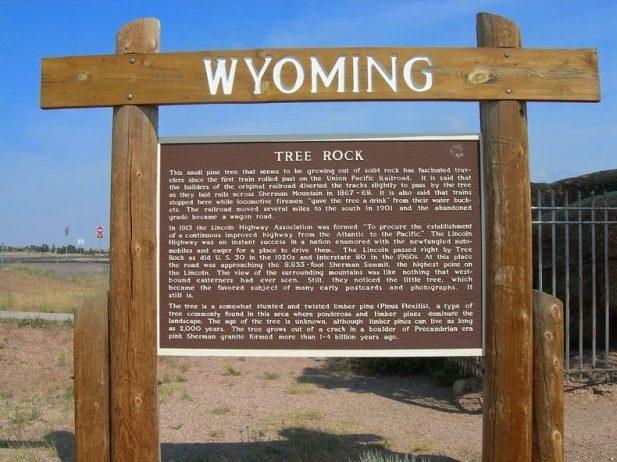 Peculiar Tree in the Rock of Wyoming0