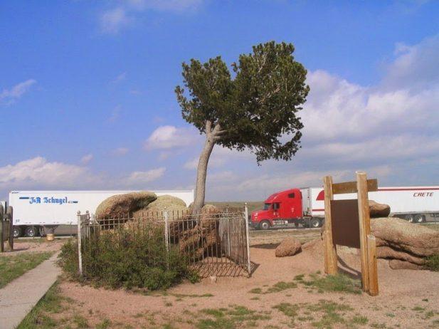 Peculiar Tree in the Rock of Wyoming1