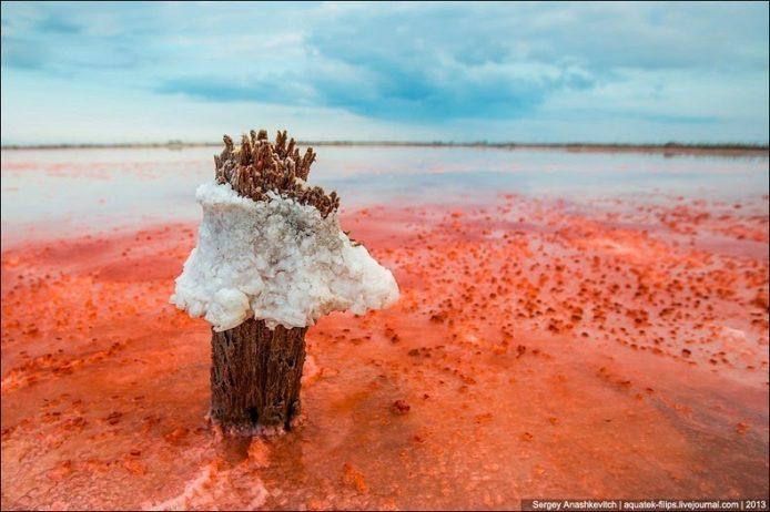 Sivash Salt Lagoons in the Crimean Peninsula15