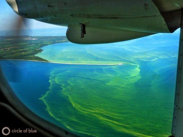 Toxic Algae Bloom On Lake Erie Charismatic Planet