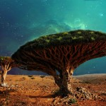 """The Unique Umbrella Shaped """"Dragon's Blood Trees"""" Which Produced Red Sap"""