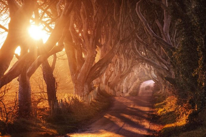 Dark Hedges in County Antrim, Ireland is a gorgeously eerie avenue of beech trees that were planted by the Stuart family back in the 1750s.